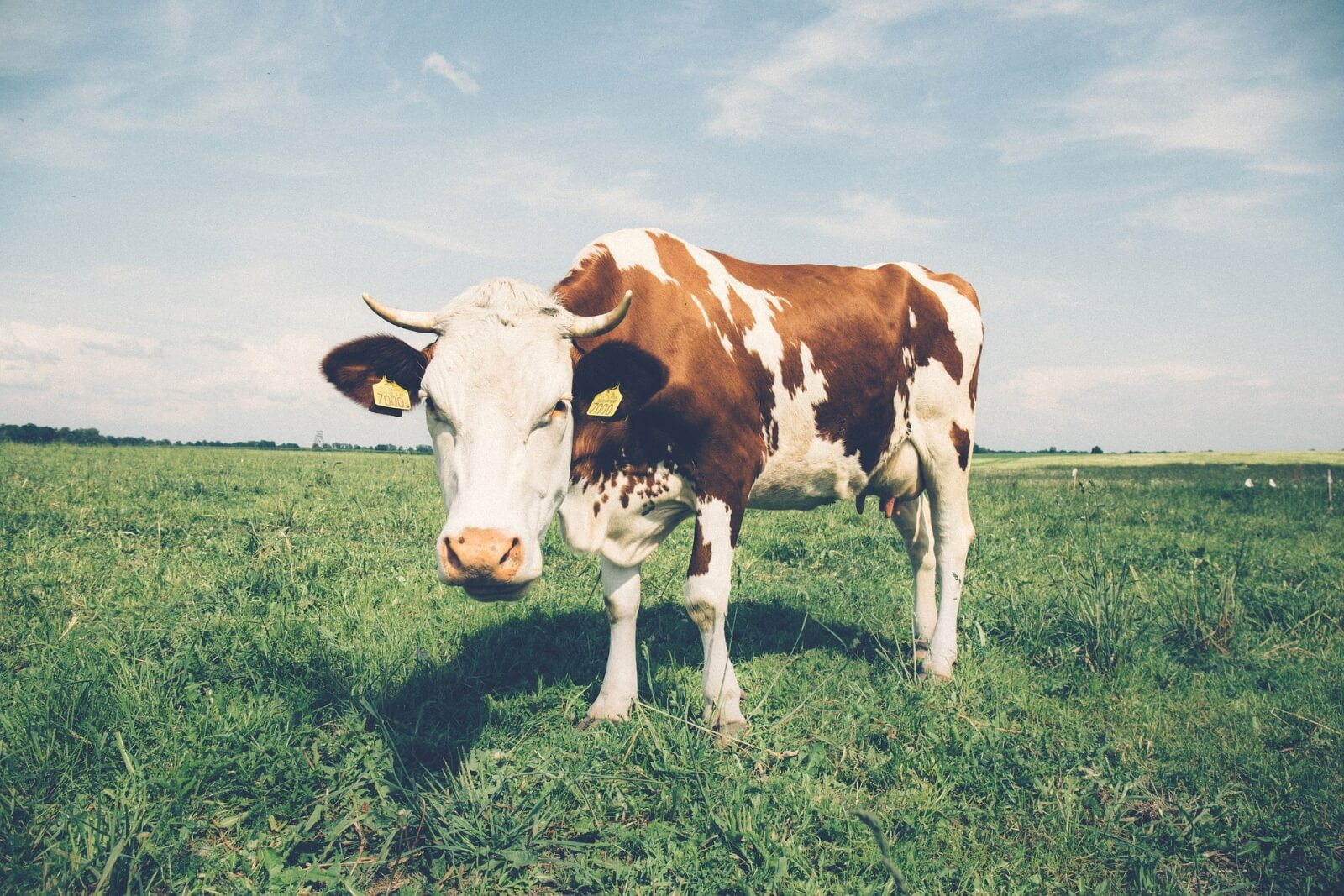 best-calcium-abloomnova.net_-1600x1067 Which milk has the best calcium source?