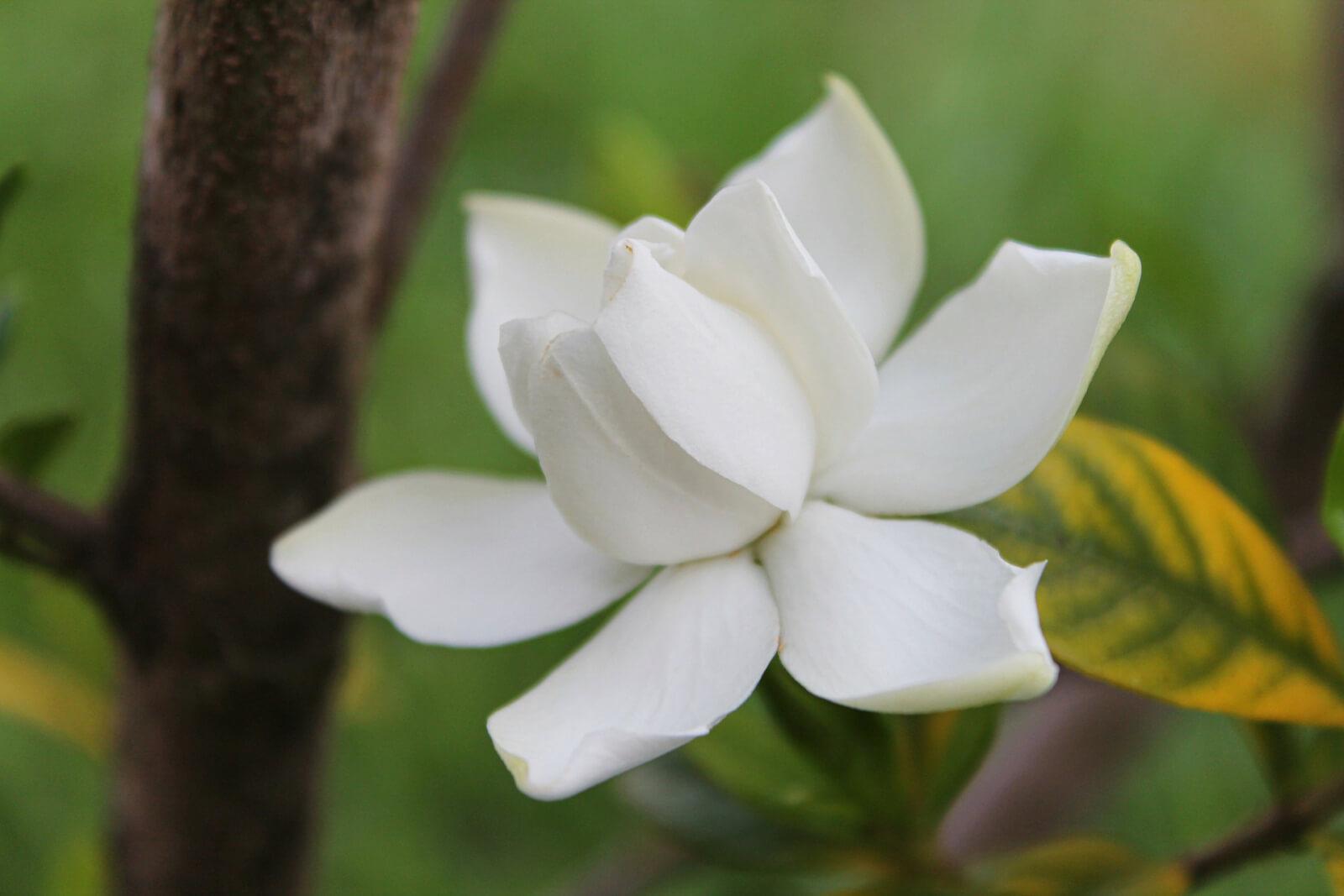 Thalgo-Polynesia-Sacred-Oil-abloomnova.net_-1600x1067 Thalgo Polynesia Sacred Oil