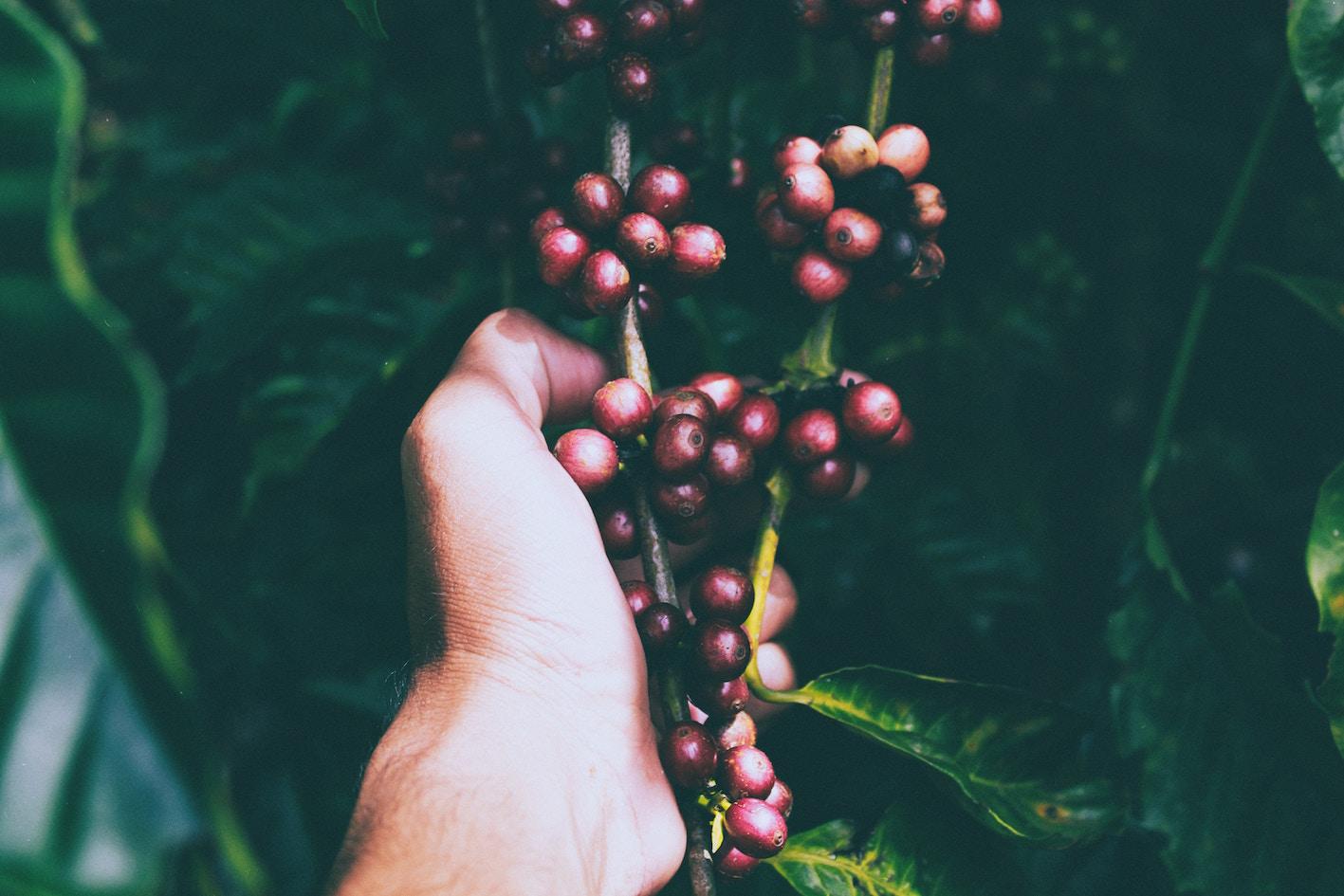 Ella-Bache-Ella-Perfect-Tomato-Exfoliating-Jelly-abloomnova.net_ Why cranberries can improve your skin